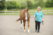 Tellington TTouch works with all animals! This is Sarah working with my horse, Flash. Pic: Bob Atkins/Horse&Rider magazine