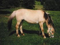 Amanda 1995