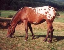 Pünktchen 1994