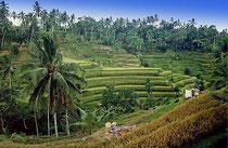 Terrazas de arroz en Pacung