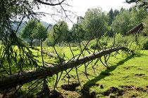 Naturpark Oberer Bayerischer Wald