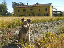 Cascina con cane di casa