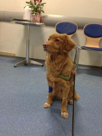 in der Tierklinik Trier