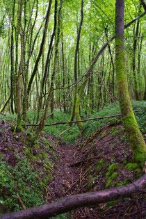 Wald von Malancourt - Verbindungsgraben