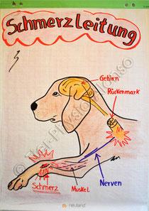 Schmerzleitung Tier-Physio-Alonso