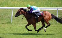 Renn-Pferde im Galopp beim Pferde-Rennen