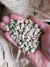 Rohkaffee aus Nicaragua
