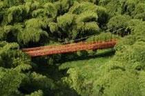 Bosque de guaduales