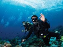 Alles bestens: In Sachen Artenvielfalt suchen die Korallenriffe von Raja Ampat weltweit ihresgleichen. Foto: Papua Diving