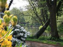 Verwunschene Schönheit: Wo einst eine von zwei Ringgräben geschützte Burg stand, die Graft heute eine Oase der Ruhe in Delmenhorst. Foto: Sönke Möhl