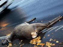 Ein Reh liegt überfahren am Straßenrand. Wildunfälle lassen sich leider kaum verhindern. Foto: Patrick Pleul