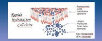 molécules d'eau passant via les aquaporines