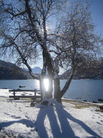 Novembersonne am St.Moritzersee