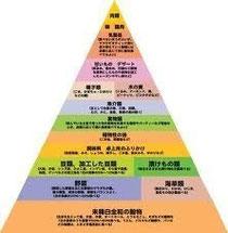 食品ピラミッドbyマクガバンレポート