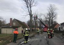 In Werben wurde die Drehleiter der Seehäuser Feuerwehr am Sonnabendnachmittag gebraucht, um gefährliche Äste eines Baumes zu entfernen. Fotos: Feuerwehr
