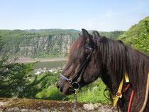 Pferde & Reiten