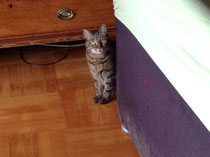 Eine von den Schmusekatzen