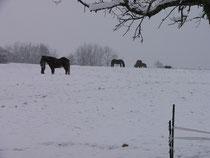 ruhiger Wintertag
