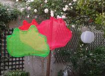papaver giganteus au vert