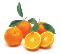 Fruithandel Kok V.O.F. Vinkeveen