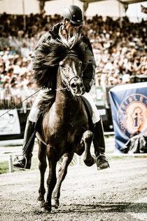 Islandpferd mit Reiter auf Turnierbahn