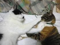 ユキチとミコは赤の他猫