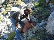 Dimitri sammelt Wildkräuter