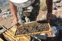 Odysseas und seine Bienen