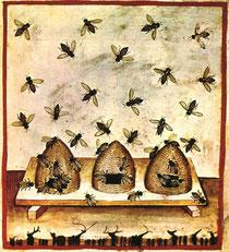 Tacuinum sanitatis casanatense ms459