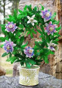 Страстоцвет из бисера, Пассифлора