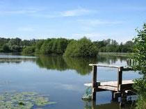 Les étangs du Cam derrière l'Historial de la Grande Guerre 14 18 Péronne Somme