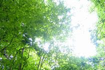 http://jp.fotolia.com/id/3029589 © victor zastol'skiy