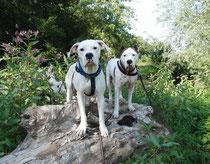 Diva (links) und Diego beim Spaziergang
