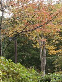 2013年秋の始り