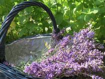 Räucherwerk Lavendel