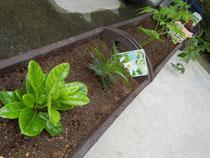 つる科の植物たち