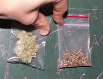les varietes de cannabis et leur dossage en THC