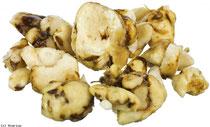 truffes magique hallucinogene de mexique