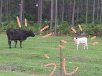 牛 (Cow)
