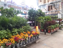 店内の観葉植物のセクション