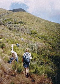 Auf dem Mt.Kenya