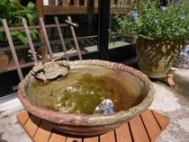 カエル水鉢~信楽焼~