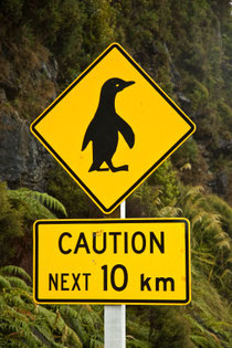 Road sign: Penguins crossing