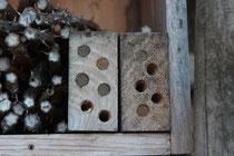 Wildbienen Info
