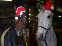 """Die Pferde wünschen ein """"Frohes Fest"""" :)"""