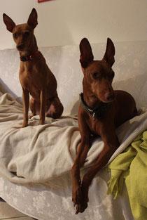 Rocco e Linda