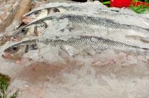 Frischfisch - Fisch-Vitamine machen vital und fit - In der richtigen Ernährung spielt Seefisch eine Schlüsselrolle