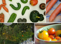Knorke: Krummes Gemüse