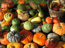 1001 légumes