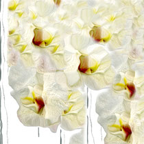 © Bouquet